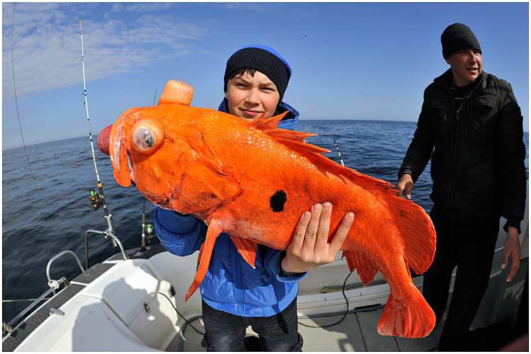 красный окунь рыбалка